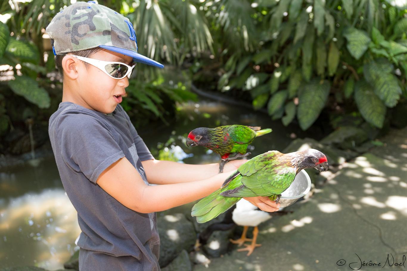Bali Bird Park - Luka donne à manger
