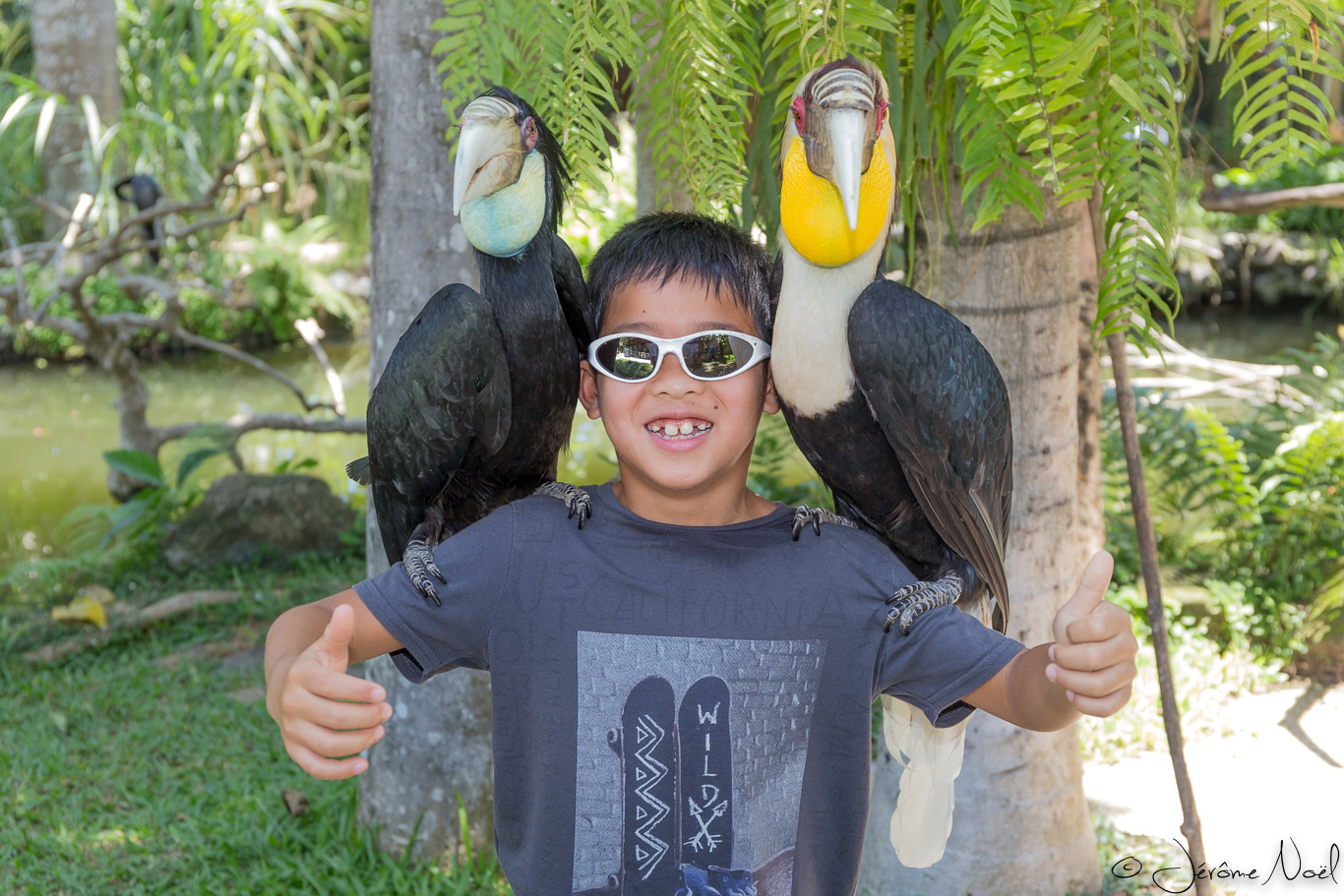 Bali Bird Park - Luka toucans
