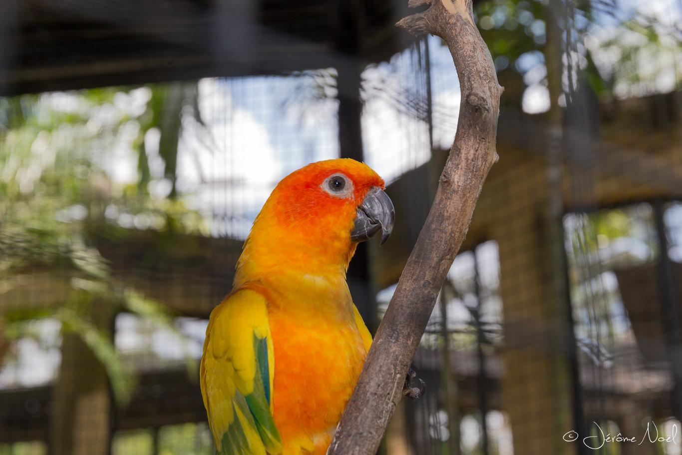 Bali Bird Park - Oiseau jaune