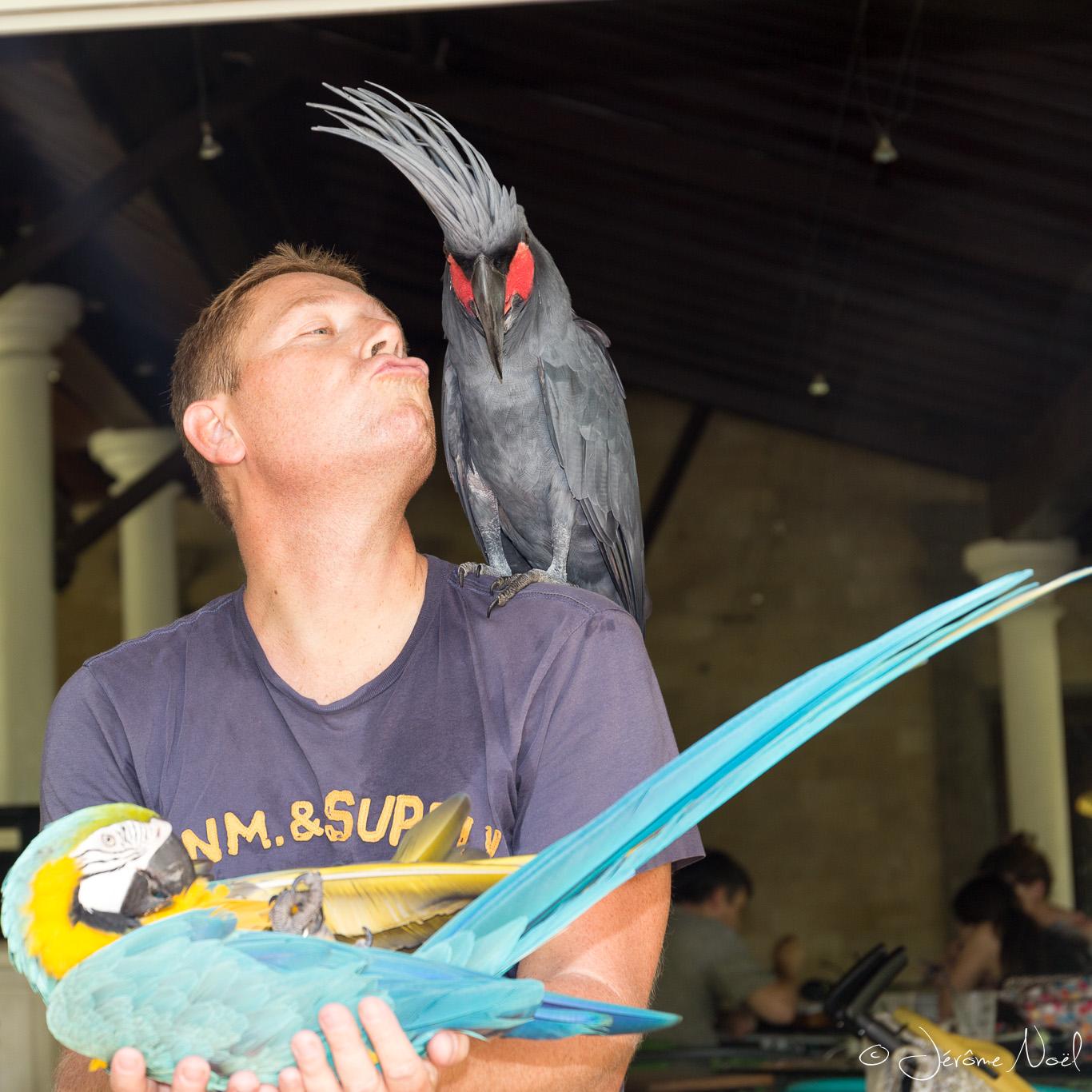 Bali Bird Park - Papa bébé