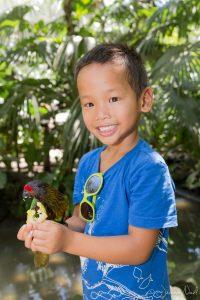 Bali Bird Park - Thomas donne à manger