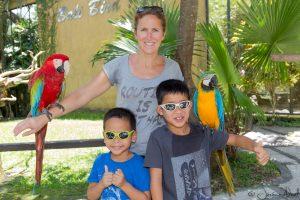Bali Bird Park - Trio perroquets
