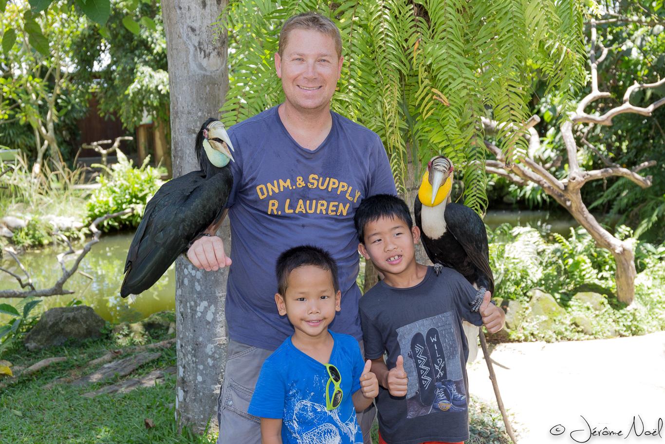 Bali Bird Park - Trio toucans
