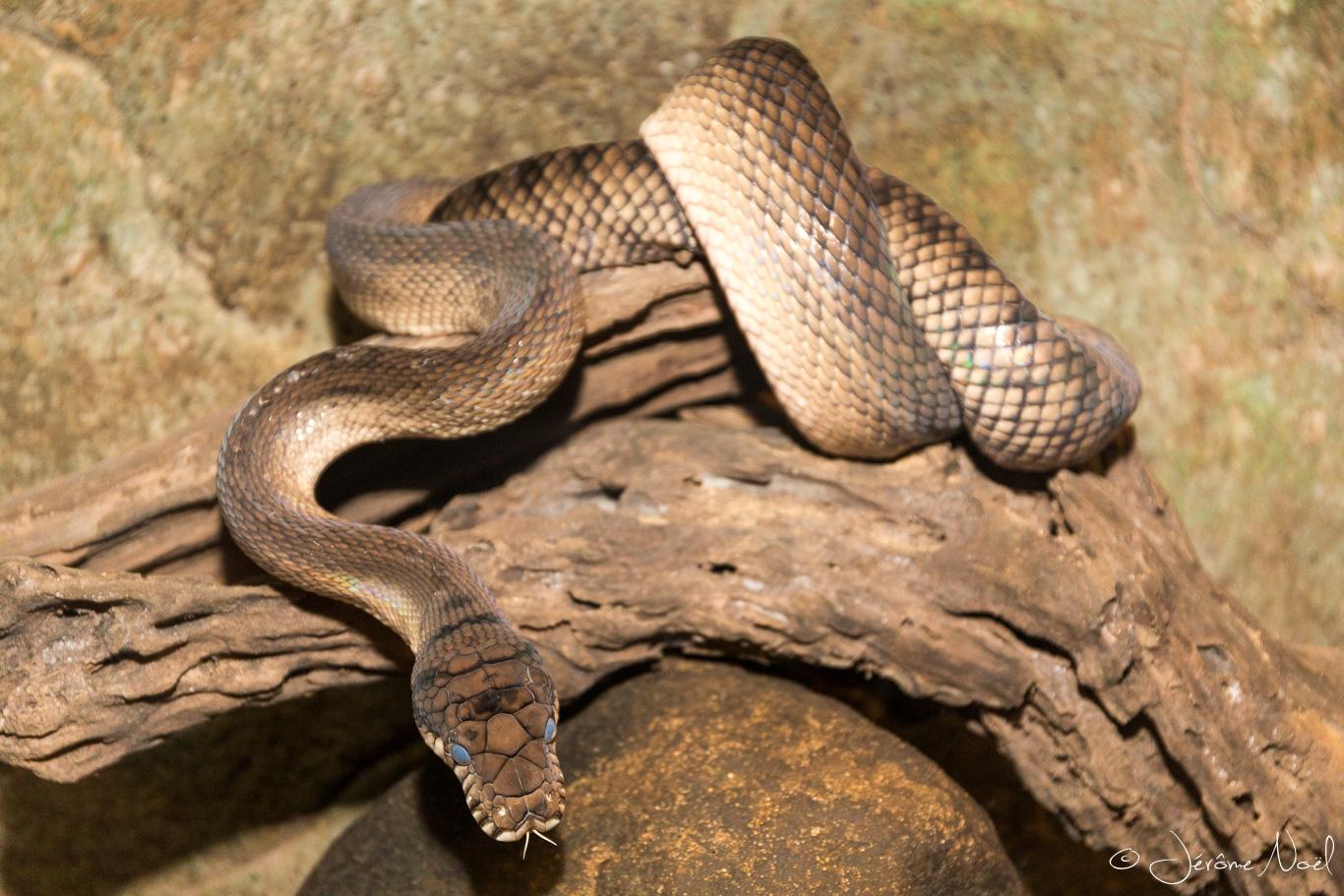 Bali Reptile Park - Serpent 2