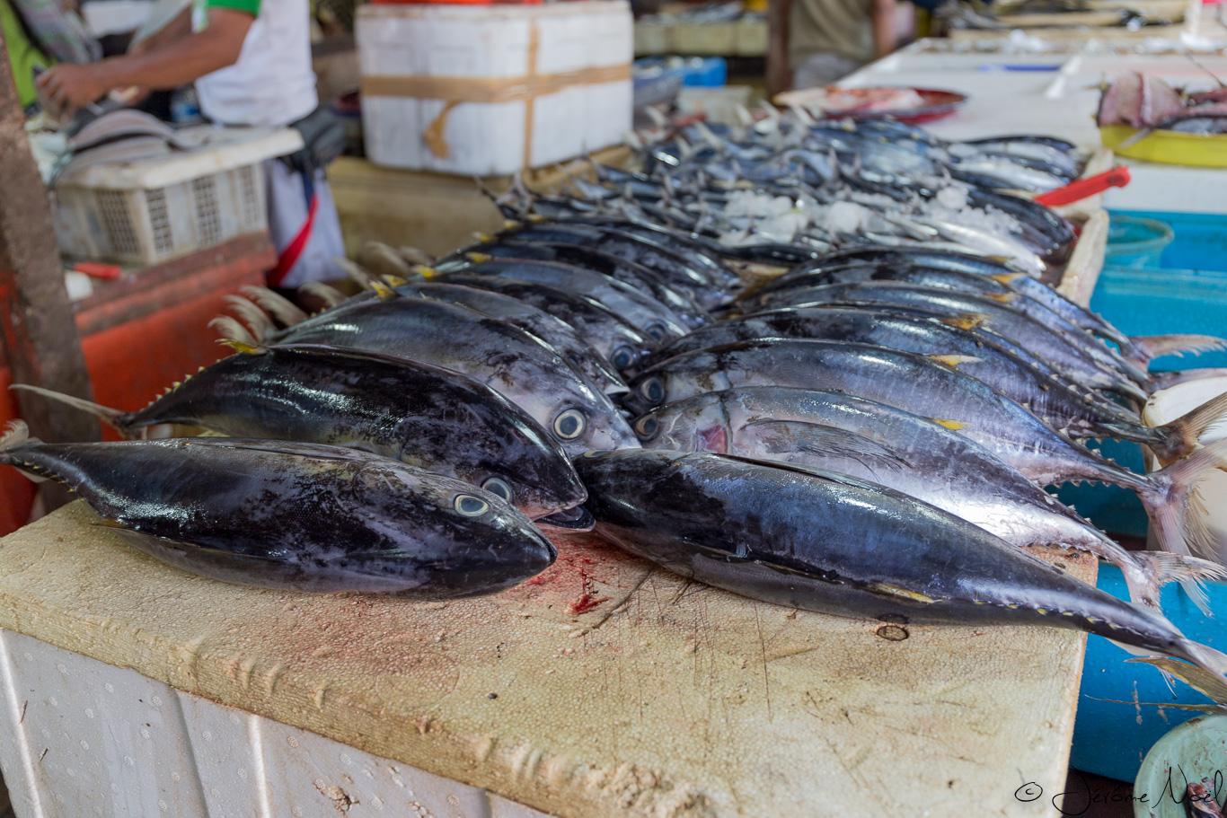 Jimbaran Fish Market - alignés
