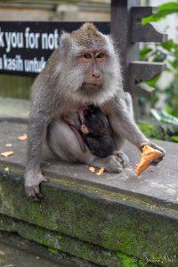 Monkey Forest - Bébé