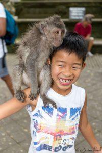 Monkey Forest - Luka
