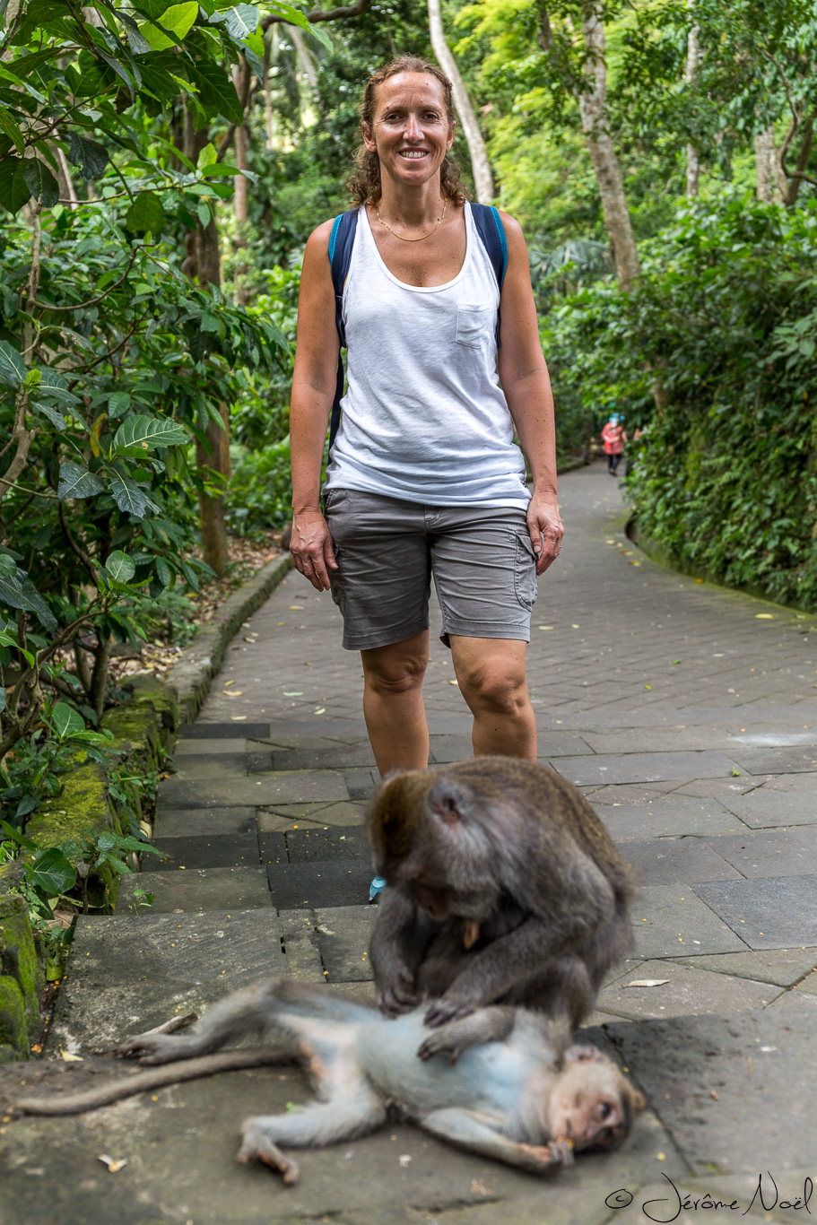 Monkey Forest - Maman
