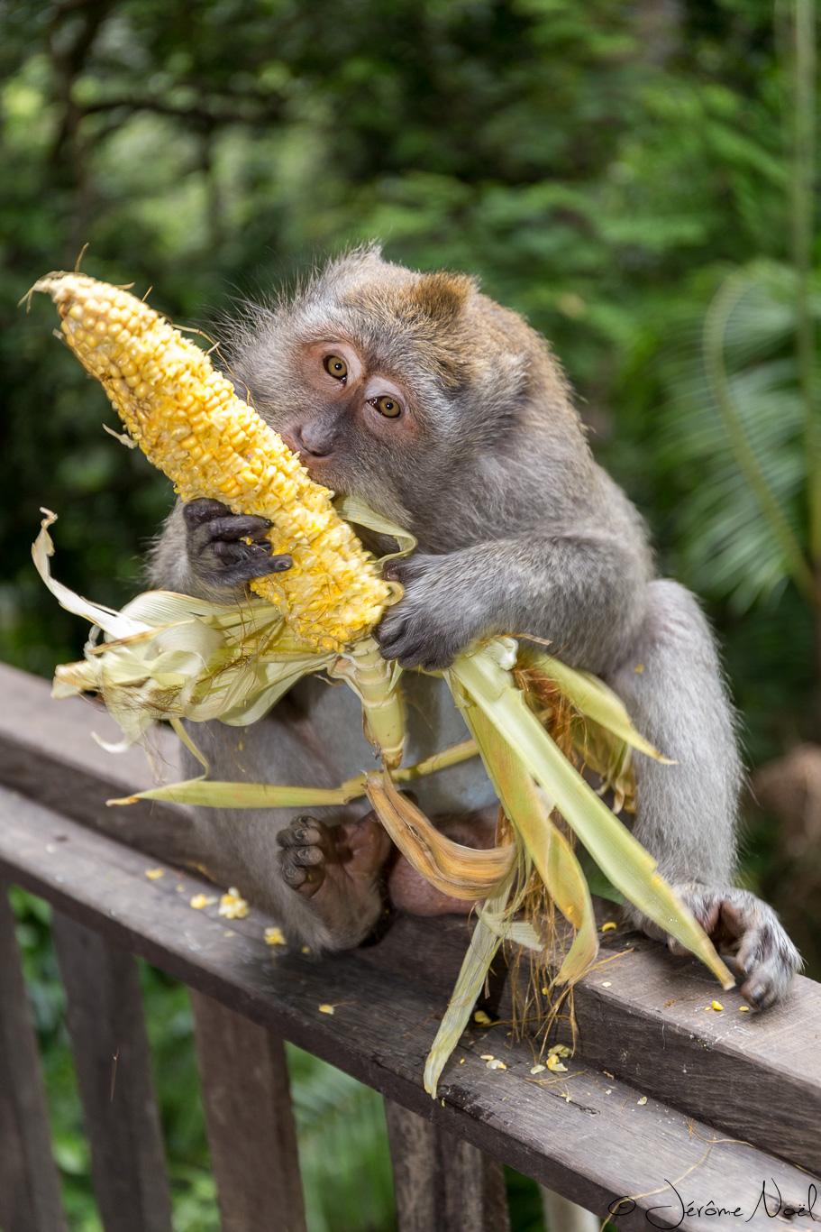Monkey Forest - Miam