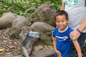 Monkey Forest - Thomas