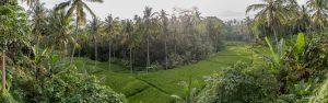Panorama rizières