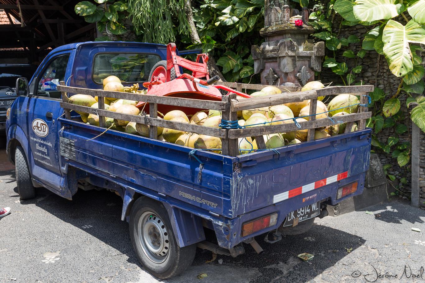 Ubud - Noix de coco